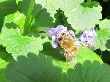 Biene - včela (Foto: Kristýna Maková, Archiv des Tschechischen Rundfunks - Radio Prag)