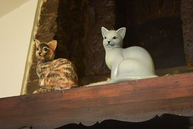 «У двух кошек», фото: Ондржей Томшу