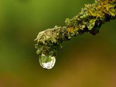 Es muss nicht gleich regnen, wichtig ist, dass es tröpfelt - nemusí pršet, jen když kape (Foto: U. Leone, Pixabay / CC0)