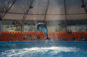 В дельфинарии, Фото: Анна Калитина