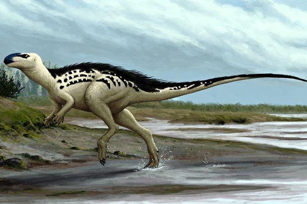 Бурианозавр аугустай (Фото: Edyta Felcyn, CC BY-ND 4.0)