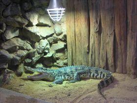 Plzeňská zoo má velkou tradici vchovu plazů, foto: Roman Casado
