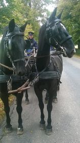 Altkladruber Pferde (Foto: Strahinja Bućan)