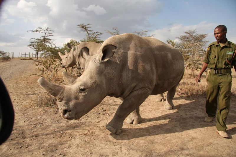 Photo: Jan Stejskal / Ol Pejeta Conservancy