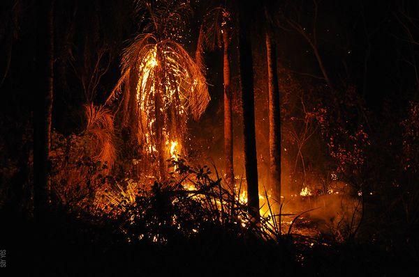 Los incendios forestales en los bosques de Bolivia, foto: Puya Raimondi, CC BY-SA 4.0