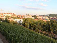 Гребовка, виноградники, Фото: Архив Радио Прага