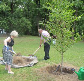 Im Schlosspark pflanzte die Botschafterin gemeinsam mit Bürgermeister Chalupka einen Baum als Symbol des 100. Bestehens Finnlands (Foto: Martina Schneibergová)