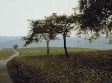 Gerhard Richter: Jabloně, foto: archiv Národní galerie v Praze