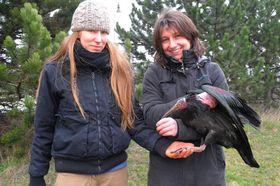 Пойманный ибис, Фото: ЧТК