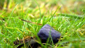 Meteorit von Vatín (Foto: ČT24)