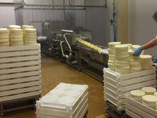 Výroba sýrů v Madetě, foto: Jitka Cibulová Vokatá, archiv ČRo