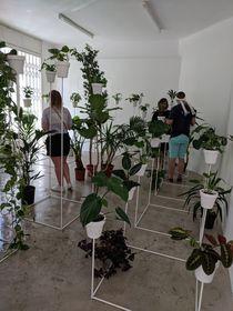 Multi_sensory botany, in cooperation with haenke, Drdova Gallery, photo: Hunt Kastner