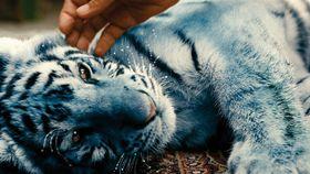 'Modrý tygr', photo: Czech Television