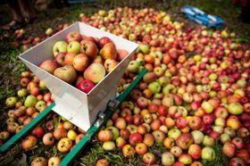 Une fête des fruits, photo : Vladimír Kučera, Archive de l'initiative Na ovoce