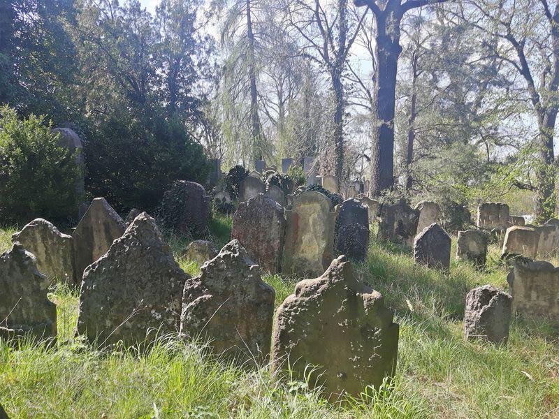 Ältester Teil des jüdischen Friedhofs (Foto: Maria Hammerich-Maier)
