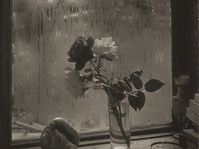 'Last Rose', 1956, © Estate of Josef Sudek. Photo: NGC