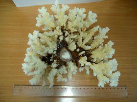Stücke von Korallen (Foto: Archiv des Zollamtes Prag-Ruzyně)