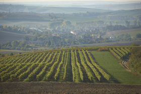 Foto: Das Weingut Spielberg