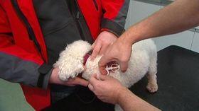 Čipování psů, foto: ČT24