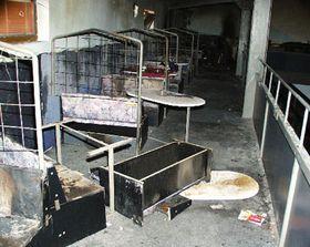 Incendio en discoteca: los visitantes lucharon por su vida, foto: CTK