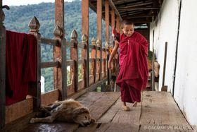 'The Little Monk', photo: Dagmar Vyhnálková