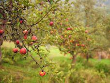 Foto: Archiv iniciativy Na ovoce
