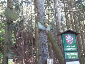 Чешский рай. Старый указатель, вросший в дерево, фото: Лорета Вашкова