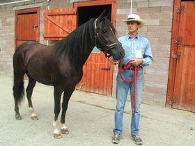 Paso fino colombiano y su propietario, Jan Kubesa