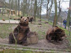 Les ours de Beroun, photo: Vojtěch Ruschka