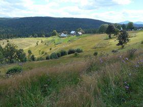 Waldkarpaten (Foto: Till Janzer)