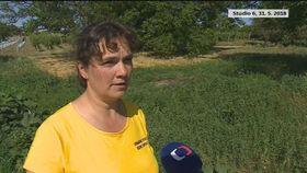 Kateřina Poledníková (Foto: ČT24)