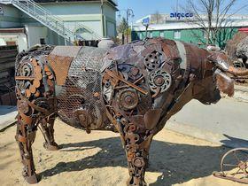 Bulle (Foto: Jitka Mládková)