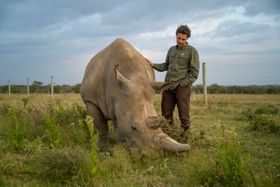 Jan Stejskal checks on Fatu, the youngest of the two northern white rhinos on the planet, photo: Ami Vitale