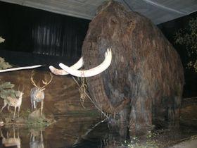 Un modelo de mamut (Foto: autor)