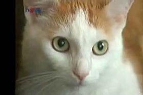 Mikes, photo: TV Nova