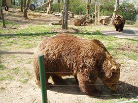 Los osos de Beroun