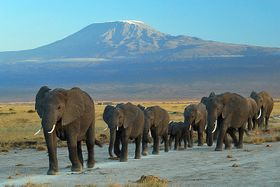 Kilimandžáro, foto: Amoghavarsha JS, Wikimedia Commons, CC BY-SA 3.0