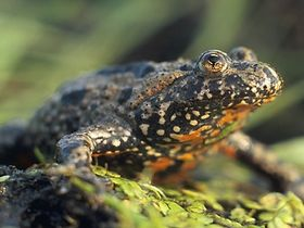 Hádat se o žabí chlup (Фото: Марек Щепанек, Wikimedia CC BY-SA 3.0)