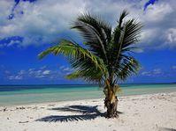 Foto: baetzpetra, Pixabay / CC0