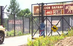 Lion safari in Dvůr Králové, photo: ČT24