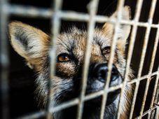 Photo: Obraz – obránci zvířat