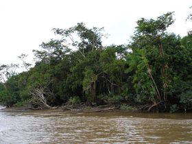 Amazonas (Foto: Chico75, Wikimedia CC BY-SA 3.0)
