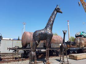 Giraffen (Foto: Jitka Mládková)