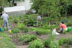Le jardin communautaire de Kotlaska