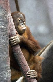 Indonesian jungle, photo: CTK