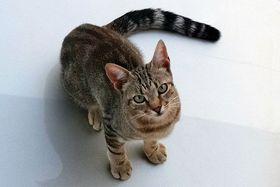 Kočka, foto: Pavla Kopřivová