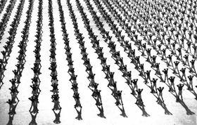Cvičení mužů na X. všesokolském sletu vroce 1938, foto: archiv ČRo