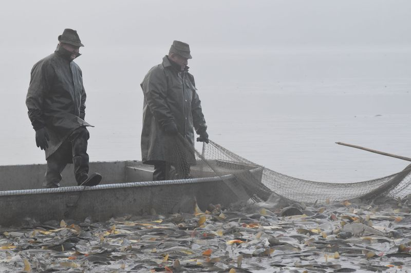 Вылов рыбы, фото: Ондржей Томшу