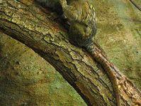 Dwarf monkeys, photo: Mistvan, CC BY 3.0 Unported