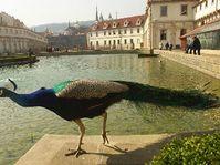 Le jardin du palais Wallenstein de Prague, photo: CTK
